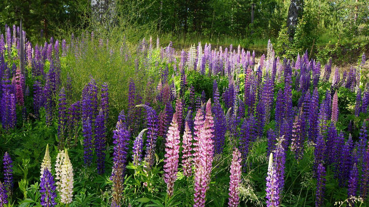 Wie Du Dir Mit Nur Einer Pflanze Einen Bauerngarten Zauberst Stilnote