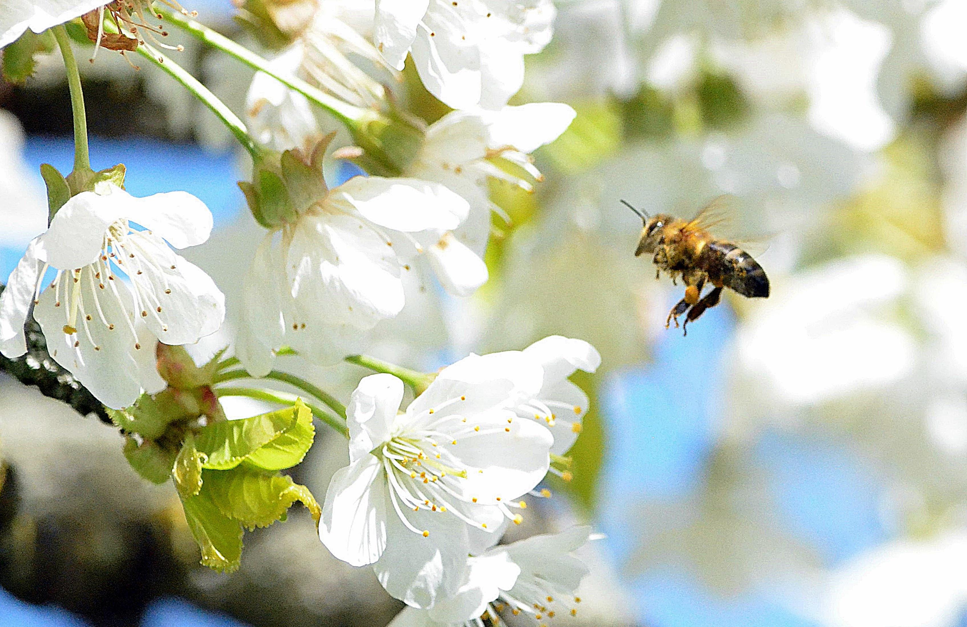 Biene im Baum.png