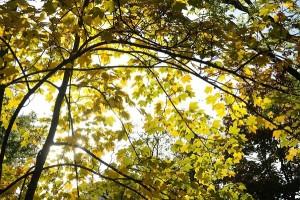 natuerlicher Sonnenschutz Garten