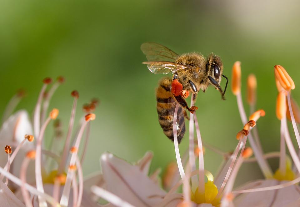 Bienen retten Tipps