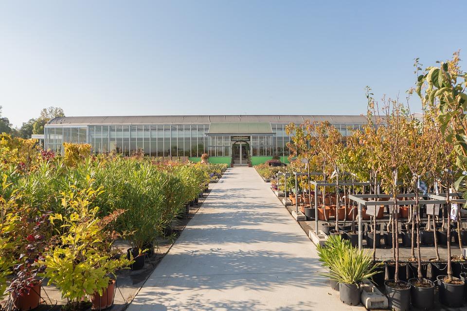 Containergehölze pflanzen